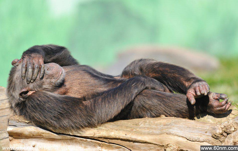 动物可爱睡姿大曝光_大千世界