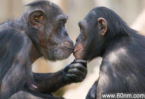 """动物也玩""""断背""""?揭十大同性恋动物_大千世界"""