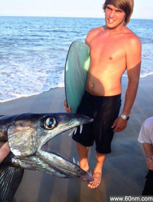 美海滩发现恐怖深海怪鱼_大千世界