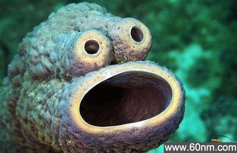 盘点那些你没见过的海洋怪物_大千世界