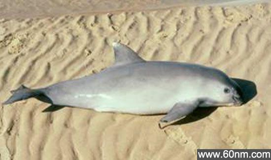 世界十大濒临灭绝的珍稀动物排行榜