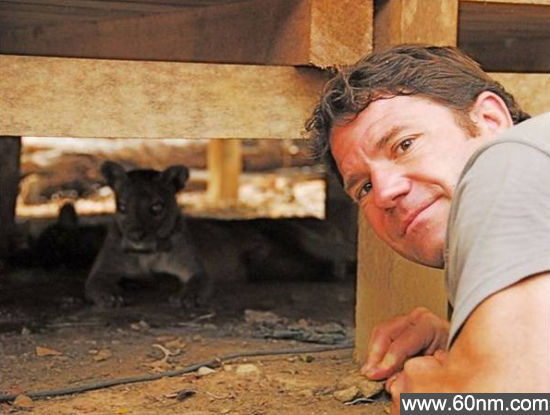 自然界30大动物杀手:山猫竟能杀死鹿_大千世界