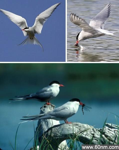"""动物迁徙的奇迹:""""我们在长征路上"""""""