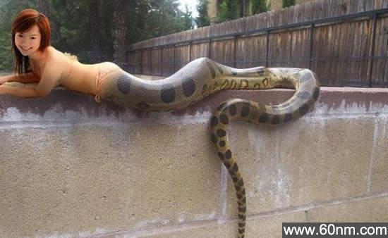 老虎和蟒蛇谁厉害