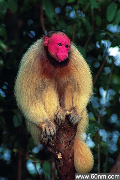 自然界十种最罕见粉色动物