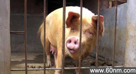《感动中国十大动物》盘点动物界的感人瞬间:令人