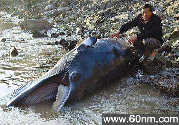 海口惊现800公斤怪鱼_大千世界
