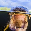 美摄影师潜伏水底拍鳄鱼露齿近照_大千世界