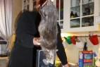 瑞典发现38厘米巨型老鼠吓跑猫_大千世界