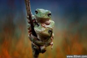 印尼青蛙兄弟镜头前手牵手晒友谊_大千世界