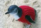澳公园为企鹅穿毛衣防吞石油_大千世界