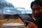 全球动物之最:中国捕获最大蚊子_大千世界