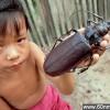 盘点世上现存昆虫界中的十大庞然大物_大千世界