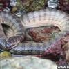 一口就要你命!盘点全球12种最毒毒蛇_大千世界