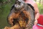 美垂钓者捉到45公斤重罕见大鳄龟_大千世界