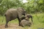南非3头小象吃过多发酵水果后醉倒_大千世界