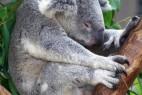 地球上7种最嗜睡的动物_大千世界