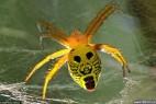 蜘蛛昆虫身体鲜艳标志神似人脸_大千世界