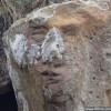 苏格兰海滩巨石上惊现诡异人脸_大千世界