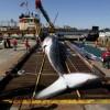 美国16米鲸鱼撞货船死亡_大千世界