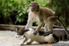 """印尼猕猴为小猫""""按摩""""_大千世界"""