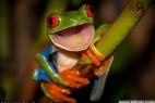 青蛙微笑瞬间酷似布偶玩具明星_大千世界