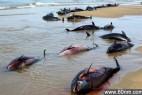 诡异的动物集体死亡事件引发全球恐慌_大千世界