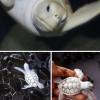 百年难遇!世界七种最罕见的白化动物_大千世界