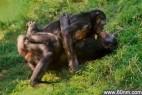 动物界十大奇葩恋:同性间也有真爱!_大千世界