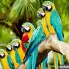 动物界十大奇事:鹦鹉语言能力超人类_大千世界