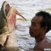 世界上十大最凶猛最庞大的淡水鱼怪_大千世界