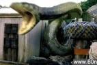 最新证据:辽宁百年蛇精竟然是真的!_大千世界