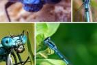 揭秘世间难得一见的十种奇特蓝色动物_大千世界