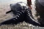 墨西哥惊现连体灰鲸:盘点罕见双头怪_大千世界