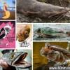 这世界怎么了?这七种鱼类竟能走路!_大千世界