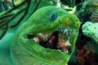 全球十大最恐怖恶魔鱼:绿巨人吓死人!_大千世界