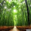 此景只因天上有!全球十大最美树隧道_大千世界