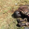 慎入!实拍南苏丹群尸坑 处处尸横遍野_大千世界