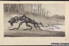 藏身在澳大利亚的十大神秘怪物揭秘_大千世界