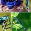 震惊!揭秘世界上十种奇特蓝色动物_大千世界