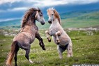 为交配而战!动物界的重口味性爱大观_大千世界
