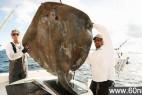 美国渔民捕到身披甲壳巨大海怪_大千世界