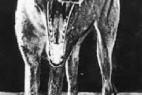 盘点已灭绝10大动物:袋狼身上有袋子_大千世界