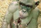 震撼双眼!20种濒临灭绝的奇特物种_大千世界