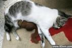 盘点超猛动物的母爱:跨种族怎么了!_大千世界