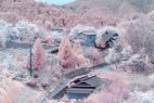 如梦似幻的人间美景:日本绝美樱花_大千世界