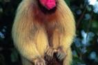 萌到极致!自然界十种最罕见粉色动物_大千世界