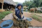 泰国大象粪便生产咖啡 每公斤售千美元_大千世界