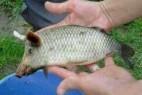 怪事:钓鱼竟钓出一条长着猪头的鱼_大千世界