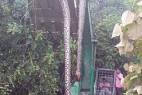 广西桂平深山挖出一条140岁金色蛇精_大千世界